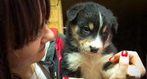 Помощь животным в Перми